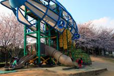 画像:霞ヶ浦総合公園(桜)
