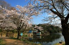 画像:宍塚大池(桜)