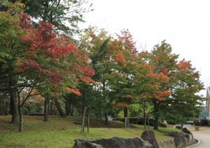 『紅葉7』の画像