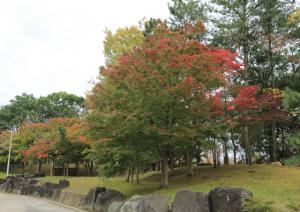 『紅葉8』の画像