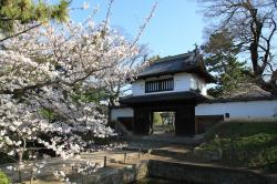 土浦の桜(亀城公園)