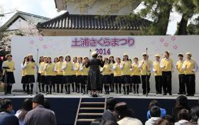 『土浦の桜まつり4』の画像