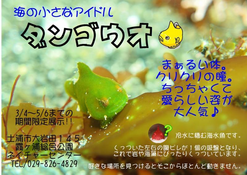 『だんご』の画像
