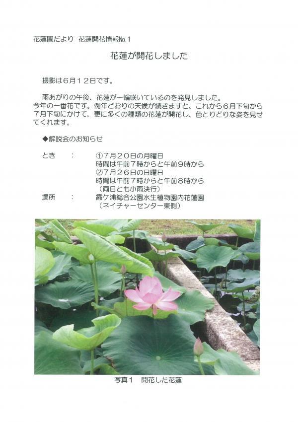 『H27.6.12花蓮開花情報』の画像
