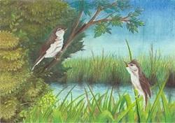 『H28年度「市の木・花・鳥」絵画作品コンクール 最優秀賞 中学校の部』の画像