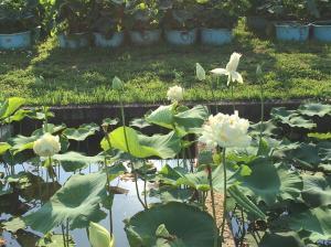 『H29花蓮(4)』の画像