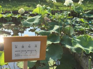 『H29花蓮(5)』の画像