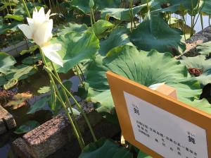 『H29花蓮(6)』の画像