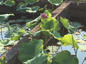 『H29花蓮(9)』の画像
