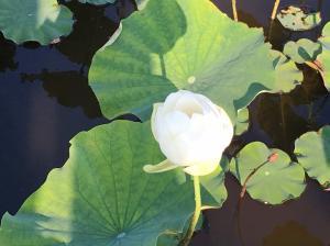 『H29花蓮(10)』の画像