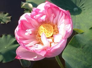 『H29花蓮(12)』の画像
