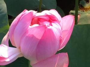 『H29花蓮(13)』の画像