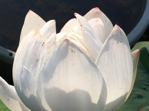 『H29花蓮(18)』の画像