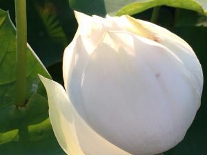 『H29花蓮(19)』の画像