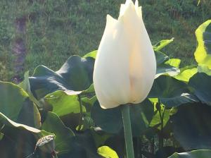 『H29花蓮㉓』の画像