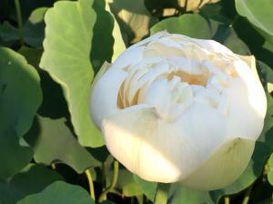 『H29花蓮㉕』の画像