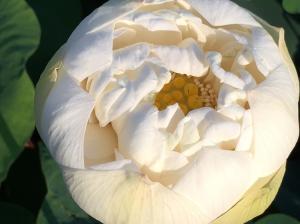 『H29花蓮㉖』の画像
