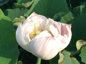 『H29花蓮㉘』の画像