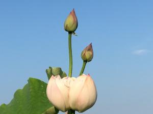 『H29花蓮㉙』の画像