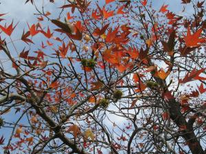 『H29紅葉㉓』の画像