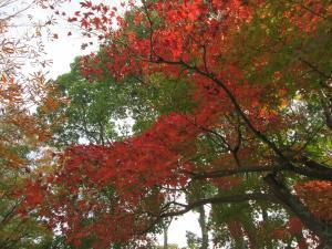 『H29紅葉㉙』の画像