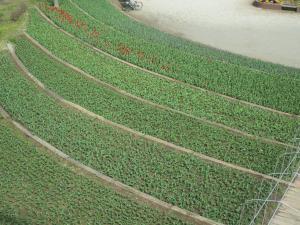『H30.3.27ちゅうりっぷ(8)風車上左から』の画像