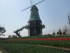 『H30.3.29ちゅうりっぷ(2)風車下から横』の画像