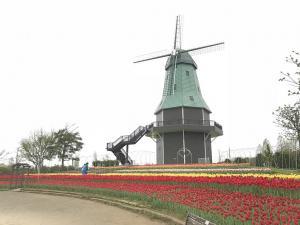 『風車とチューリップ3』の画像