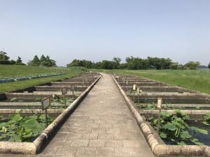『花蓮園5017』の画像