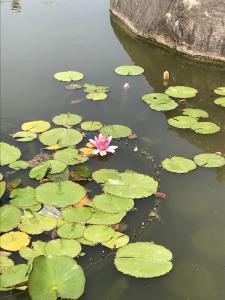 『花蓮0517』の画像