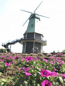 『ペチュニアと風車』の画像