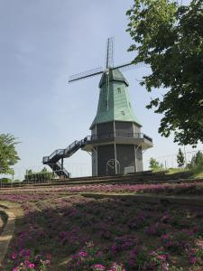『風車0517』の画像