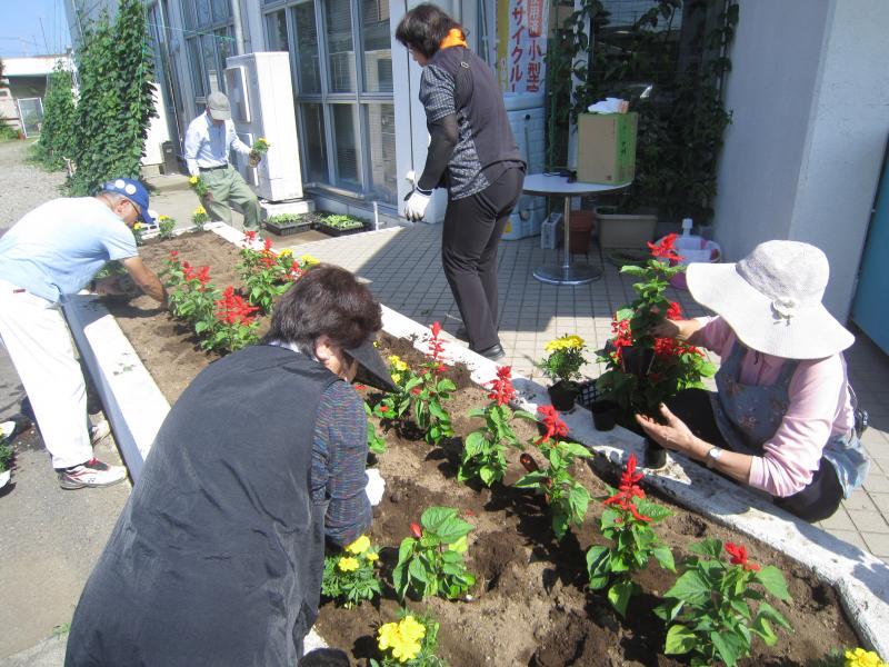 『マリーゴールドとサルビアを植えています』の画像