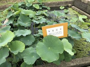 『6.13 花蓮園』の画像