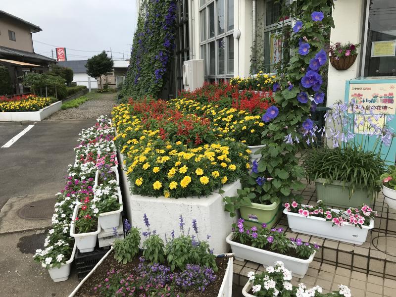 『来館者をおもてなしする花壇のお花たち』の画像