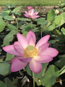 『7月14日花蓮4』の画像