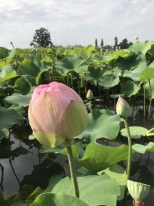 『7月14日花蓮5』の画像