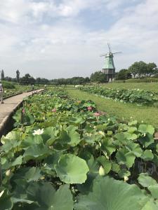『7月14日花蓮園と風車1』の画像