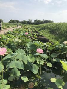 『7月14日花蓮園2』の画像