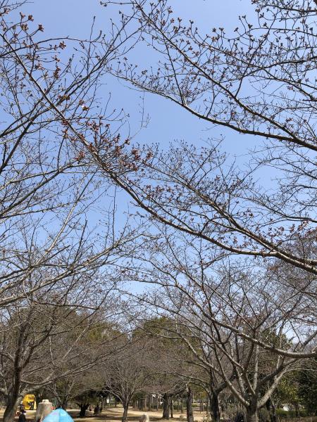 『『『2019公園内桜』の画像』の画像』の画像