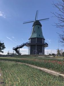 『2019.4.1風車チューリップ』の画像