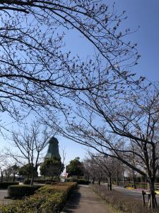 『2019.4.3桜と風車』の画像