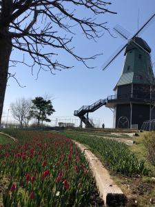 『2019.4.3風車とチューリップ3』の画像