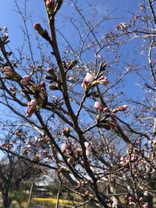 『2019.4.3桜』の画像