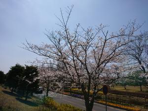 『2019.桜2』の画像