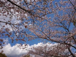 『2019.4.9桜』の画像