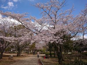 『2019.4.9桜(2)』の画像