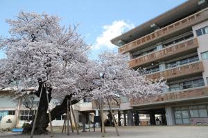『『『『『真鍋の桜』の画像』の画像』の画像』の画像』の画像