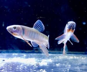 セミナー魚