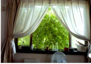 グリーンカーテン 室内